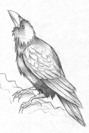 Inktober: Raven